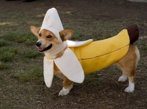 Dog_in_Banana_Costume