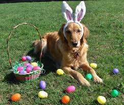 Doggie_Easter_egg_hunt