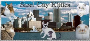 Steel City Kitties @ Monroeville Convention Center | Monroeville | Pennsylvania | United States
