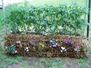 Straw Bale Gardening @ Monroeville Public Library - Gallery Space | Monroeville | Pennsylvania | United States